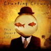 Counting Crows - This Desert Life (1999) 320kbps